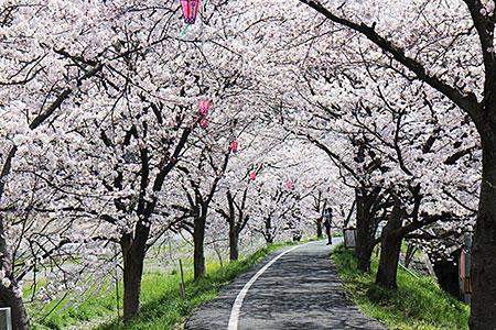 2018年3月23日(金)~4月10日(火) 第65回井原桜まつり